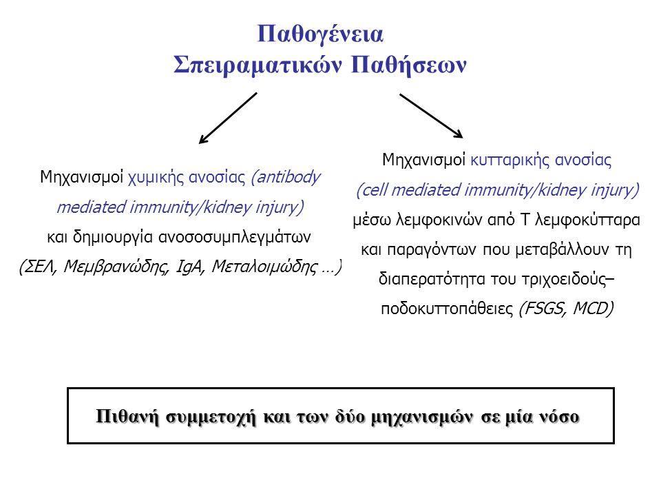 Παθογένεια Σπειραματικών Παθήσεων Μηχανισμοί χυμικής ανοσίας (antibody mediated immunity/kidney injury) και δημιουργία ανοσοσυμπλεγμάτων (ΣΕΛ, Μεμβρανώδης, ΙgA, Mεταλοιμώδης …) Μηχανισμοί κυτταρικής ανοσίας (cell mediated immunity/kidney injury) μέσω λεμφοκινών από Τ λεμφοκύτταρα και παραγόντων που μεταβάλλουν τη διαπερατότητα του τριχοειδούς– ποδοκυττοπάθειες (FSGS, MCD) Πιθανή συμμετοχή και των δύο μηχανισμών σε μία νόσο