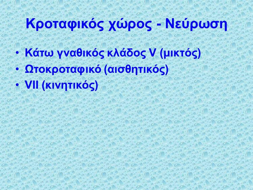 Κροταφικός χώρος - Νεύρωση Κάτω γναθικός κλάδος V (μικτός) Ωτοκροταφικό (αισθητικός) VΙΙ (κινητικός)