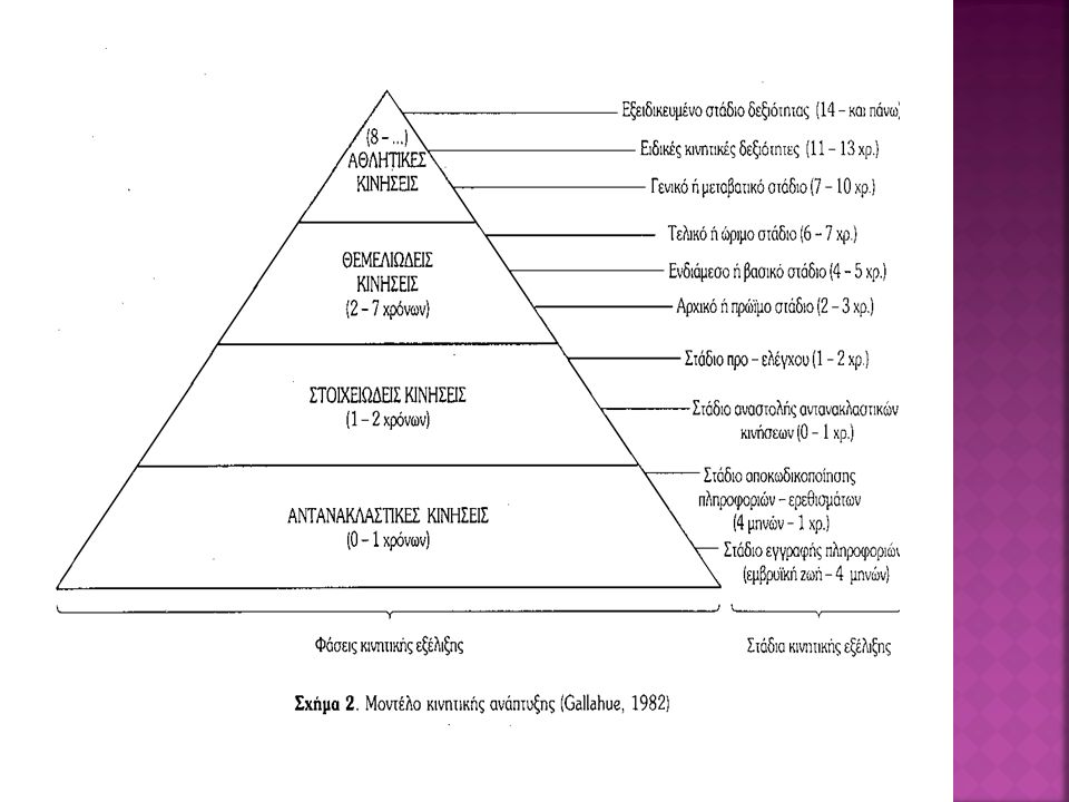o Η φάση αυτή περιλαμβάνει 2 στάδια: α) στάδιο συλλογής πληροφοριών – ερεθισμάτων β) στάδιο αποκωδικοποίησης των πληροφοριών- ερεθισμάτων o Οι αντανακλαστικές κινήσεις είναι ακούσιες κινήσεις, έμφυτες, χωρίς συνειδητή βούληση.