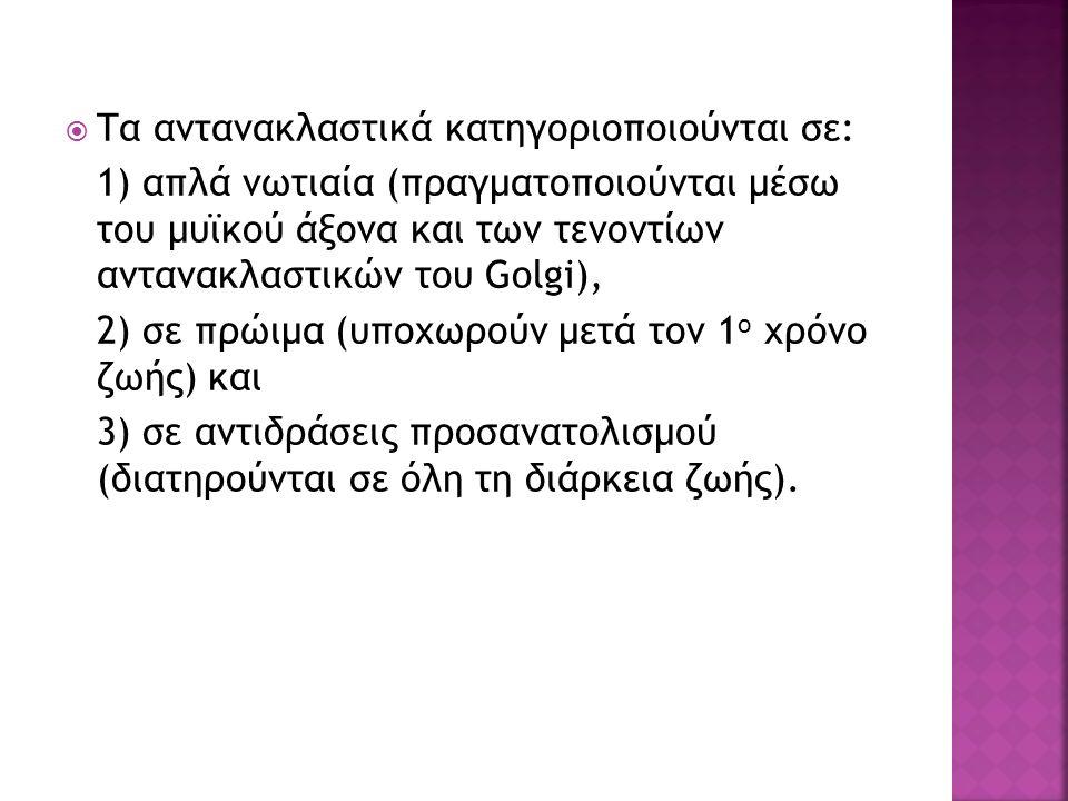  Τα αντανακλαστικά κατηγοριοποιούνται σε: 1) απλά νωτιαία (πραγματοποιούνται μέσω του μυϊκού άξονα και των τενοντίων αντανακλαστικών του Golgi), 2) σ
