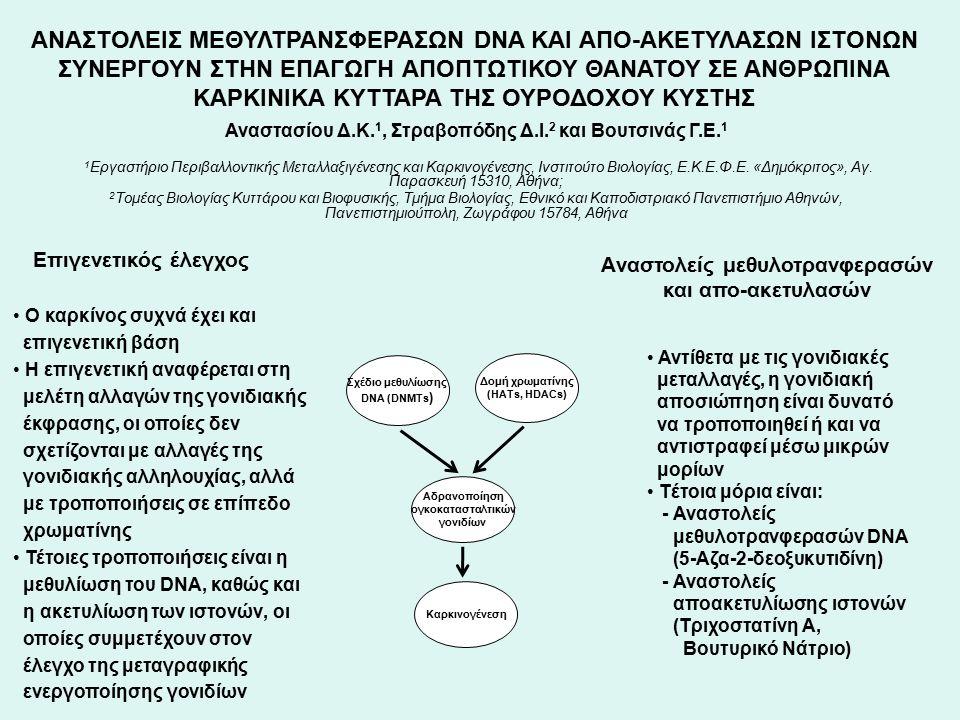 Βιολογικό σύστημα, μέθοδοι και σκοπός της εργασίας RT4 (grade I) RT112 ( grade I-II ) T24 (grade III) ΜΤΤ Ανοσοαποτύπωση Western Αντίστροφη μεταγραφή – Αλυσιδωτή αντίδραση πολυμεράσης ΣΚΟΠΟΣ Διερευνήθηκε η ατομική και συνδυασμένη επίδραση του αναστολέα μεθυλοτρανφερασών 5-aza-CdR και των αναστολέων απο- ακετυλίωσης ιστονών τριχοστατίνης Α και βουτυρικού νατρίου σε ανθρώπινα καρκινικά κύτταρα ουροδόχου κύστης ΜΕΘΟΔΟΙ