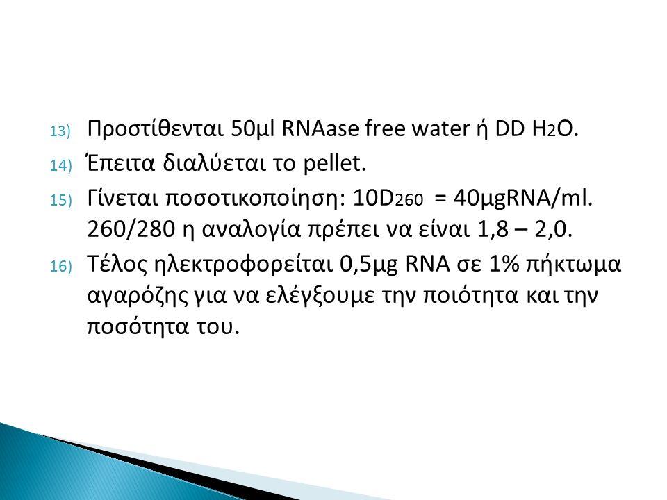 13) Προστίθενται 50μl RNAase free water ή DD H 2 O.