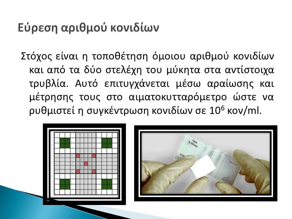 Στόχος είναι η τοποθέτηση όμοιου αριθμού κονιδίων και από τα δύο στελέχη του μύκητα στα αντίστοιχα τρυβλία.