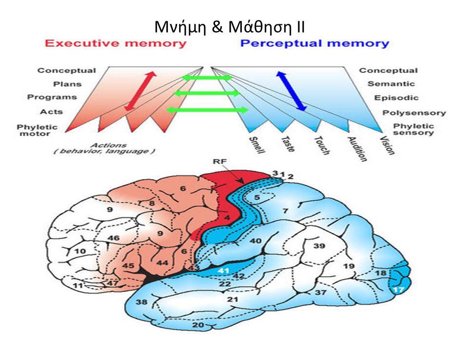 Μνήμη & Μάθηση ΙΙ