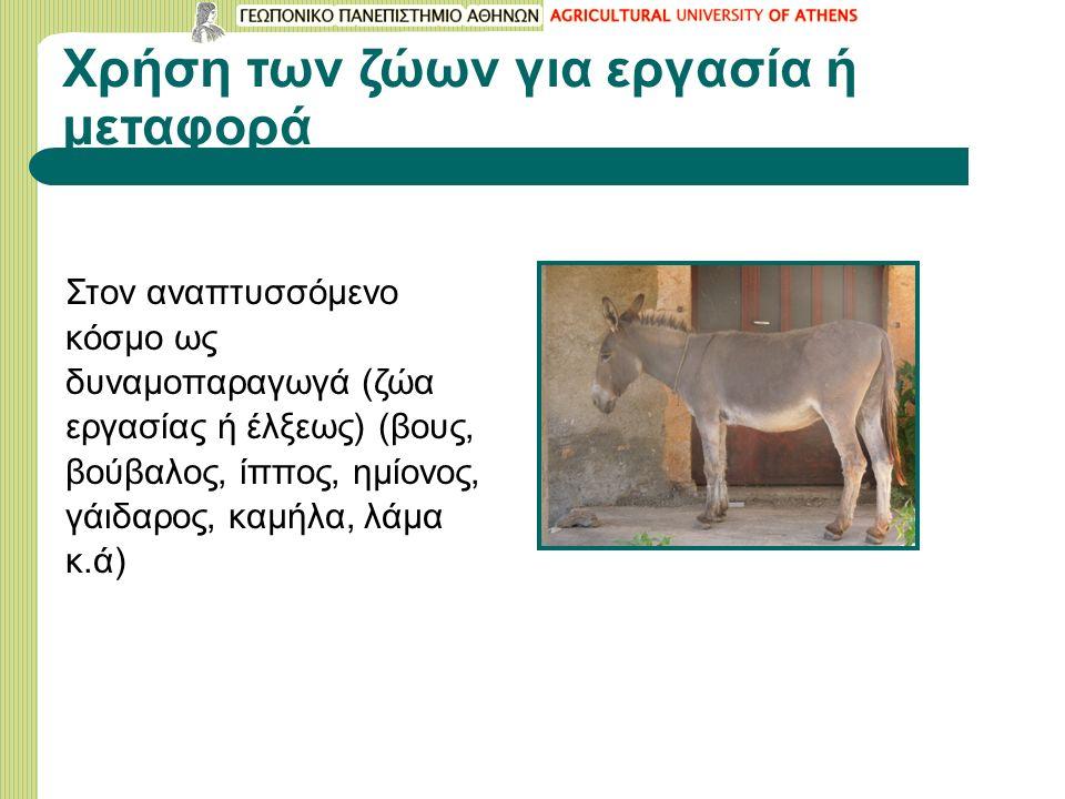 Χρήση των ζώων για εργασία ή μεταφορά Στον αναπτυσσόμενο κόσμο ως δυναμοπαραγωγά (ζώα εργασίας ή έλξεως) (βους, βούβαλος, ίππος, ημίονος, γάιδαρος, καμήλα, λάμα κ.ά)