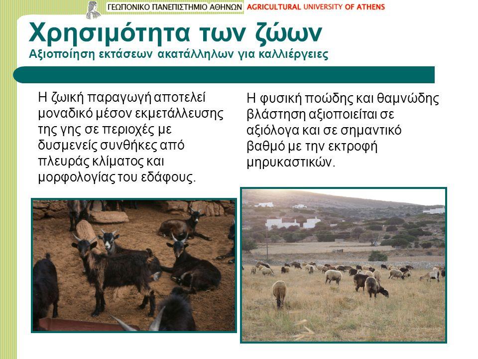 Xρησιμότητα των ζώων Αξιοποίηση εκτάσεων ακατάλληλων για καλλιέργειες H ζωική παραγωγή αποτελεί μοναδικό μέσον εκμετάλλευσης της γης σε περιοχές με δυσμενείς συνθήκες από πλευράς κλίματος και μορφολογίας του εδάφους.