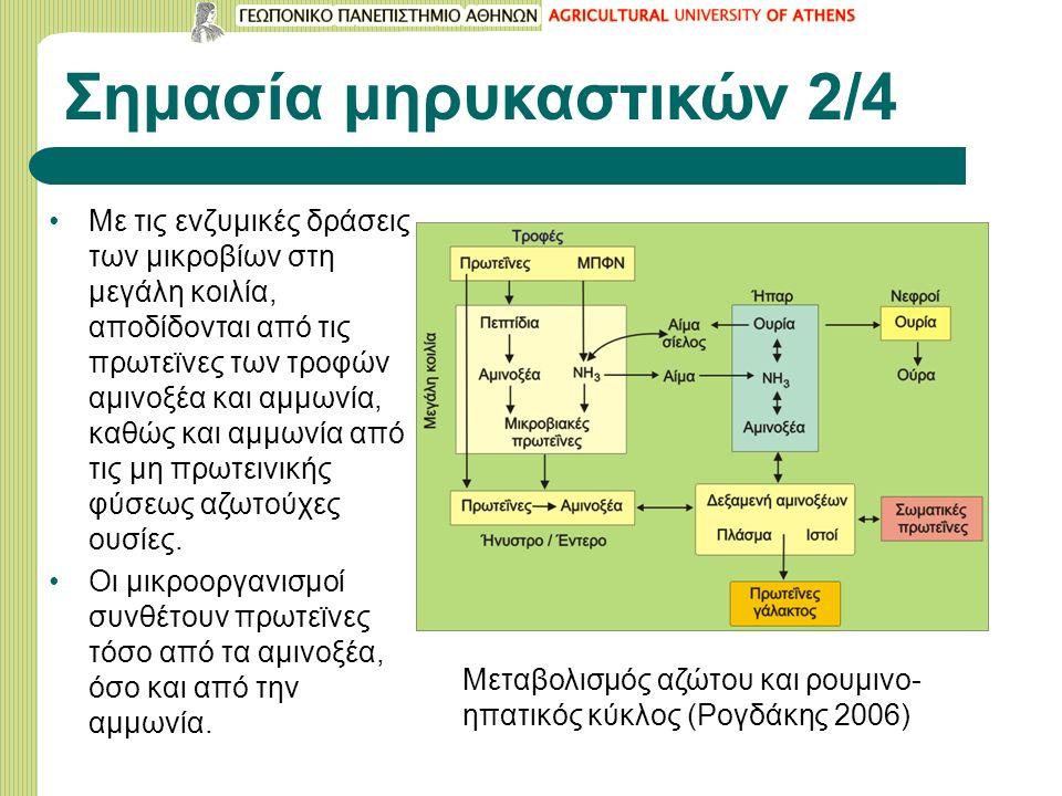 Σημασία μηρυκαστικών 2/4 Με τις ενζυμικές δράσεις των μικροβίων στη μεγάλη κοιλία, αποδίδονται από τις πρωτεϊνες των τροφών αμινοξέα και αμμωνία, καθώς και αμμωνία από τις μη πρωτεινικής φύσεως αζωτούχες ουσίες.