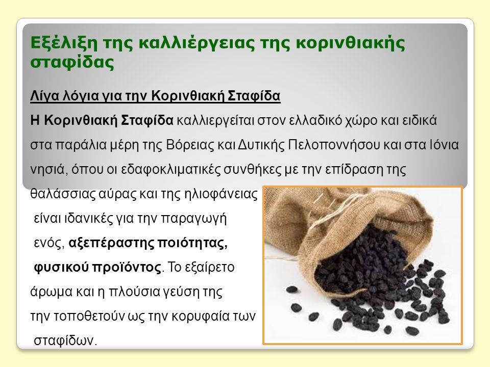 Εξέλιξη της καλλιέργειας της κορινθιακής σταφίδας Λίγα λόγια για την Κορινθιακή Σταφίδα Η Κορινθιακή Σταφίδα καλλιεργείται στον ελλαδικό χώρο και ειδι