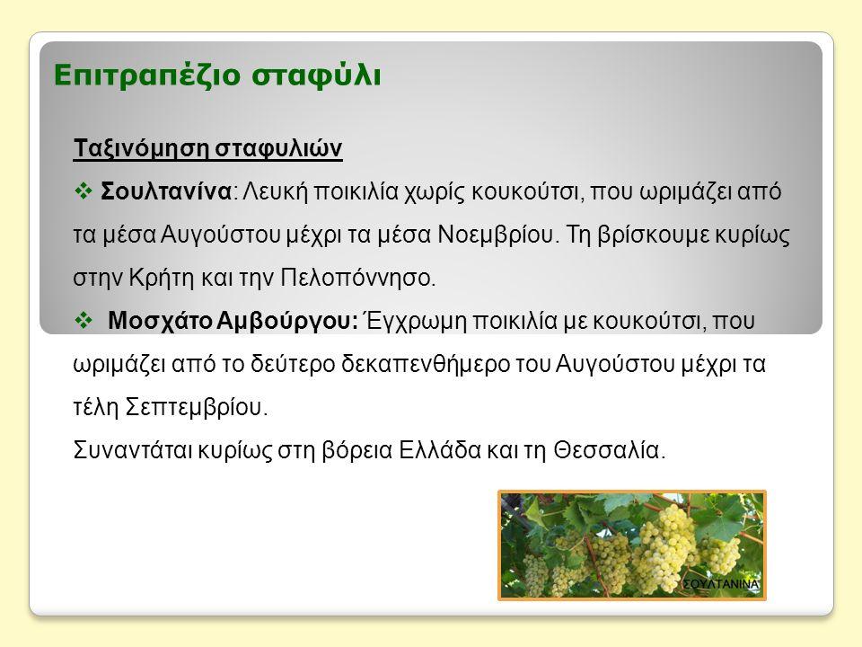 Επιτραπέζιο σταφύλι Ταξινόμηση σταφυλιών  Σουλτανίνα: Λευκή ποικιλία χωρίς κουκούτσι, που ωριμάζει από τα μέσα Αυγούστου μέχρι τα μέσα Νοεμβρίου. Τη