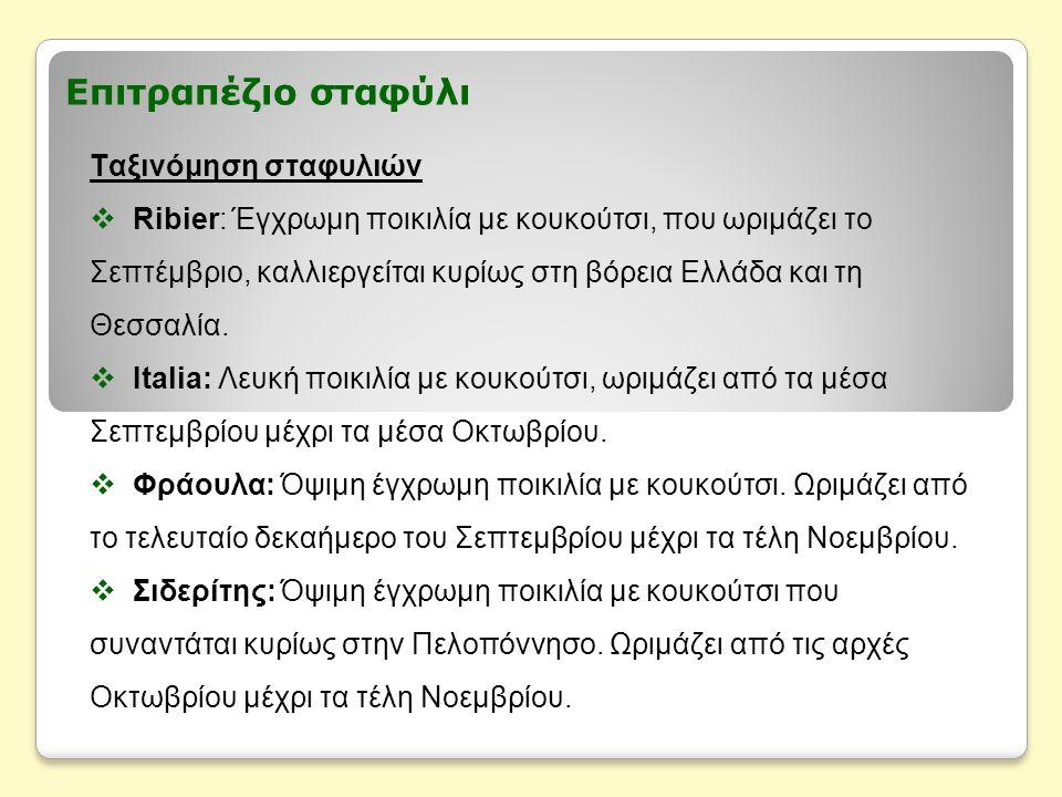 Επιτραπέζιο σταφύλι Ταξινόμηση σταφυλιών  Ribier: Έγχρωμη ποικιλία με κουκούτσι, που ωριμάζει το Σεπτέμβριο, καλλιεργείται κυρίως στη βόρεια Ελλάδα και τη Θεσσαλία.