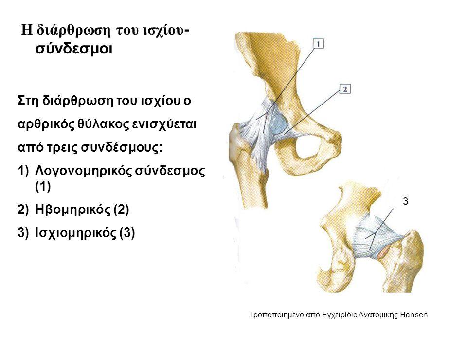Η διάρθρωση του ισχίου - σύνδεσμοι Στη διάρθρωση του ισχίου ο αρθρικός θύλακος ενισχύεται από τρεις συνδέσμους: 1)Λογονομηρικός σύνδεσμος (1) 2)Ηβομηρικός (2) 3)Ισχιομηρικός (3) 3 Τροποποιημένο από Εγχειρίδιο Ανατομικής Hansen