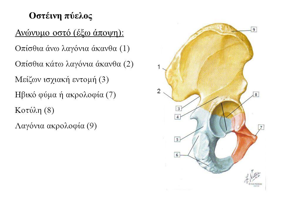 Οστέινη πύελος Ανώνυμο οστό (έξω άποψη): Οπίσθια άνω λαγόνια άκανθα (1) Οπίσθια κάτω λαγόνια άκανθα (2) Μείζων ισχιακή εντομή (3) Ηβικό φύμα ή ακρολοφία (7) Κοτύλη (8) Λαγόνια ακρολοφία (9) 1 2