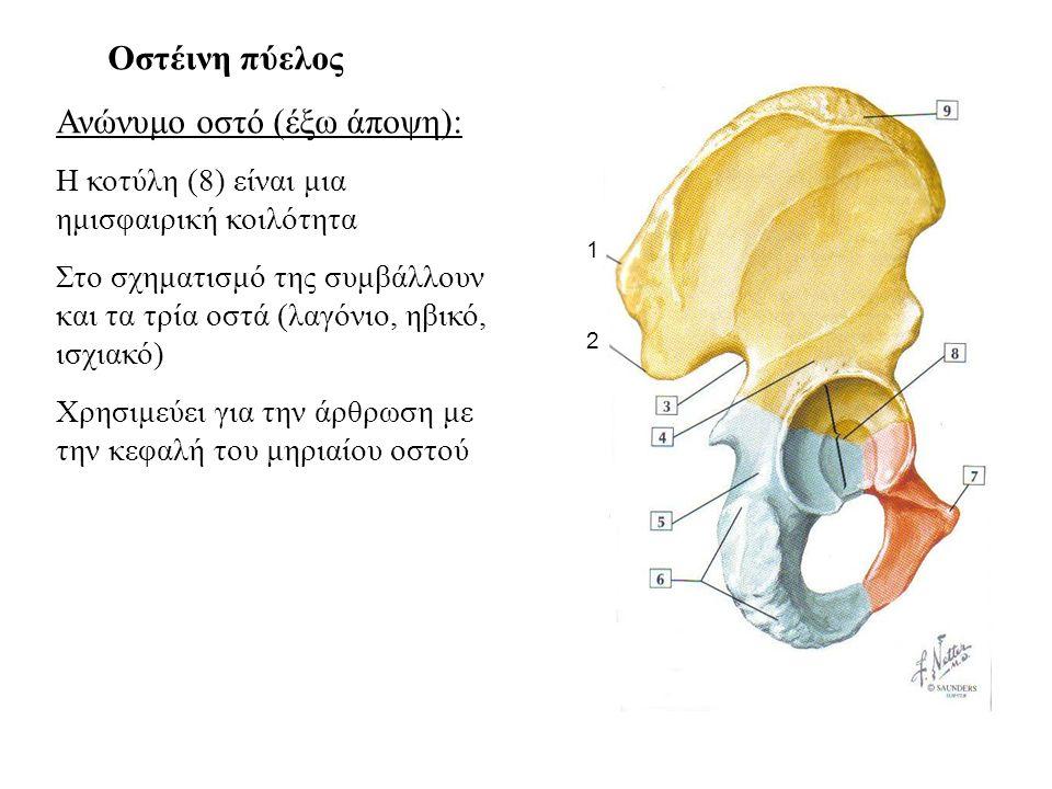 Οστέινη πύελος Ανώνυμο οστό (έξω άποψη) Λαγόνιος βόθρος (1) Κτενιαία γραμμή (2) Ισχιακό οστό (3) Ελάσσων ισχιακή εντομή (4) Ισχιακή άκανθα (5) Αρθρική επιφάνεια σύνταξης με το ιερό οστό (6)