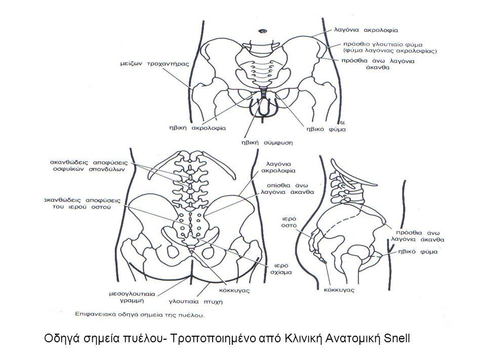 Η ιερολαγόνια διάρθρωση Τροποποιημένο από Κλινική Ανατομική Snell