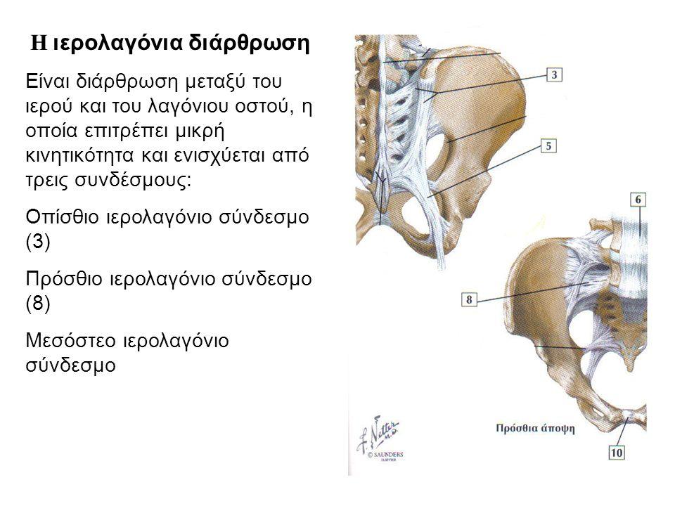 Η διάρθρωση του ισχίου Ανώνυμο οστό (έξω άποψη) Αρθρική επιφάνεια κοτύλης (μηνοειδής) (1) Αρθρικός χόνδρος κοτύλης (2) Κεφαλή μηριαίου οστού (3) Η διάρθρωση του ισχίου είναι μια πολυαξονική σφαιροειδής διάρθρωση μεταξύ της κοτύλης και της κεφαλής του μηριαίου οστού 2 3