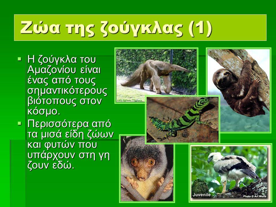 12  Η ζούγκλα του Αμαζονίου είναι ένας από τους σημαντικότερους βιότοπους στον κόσμο.