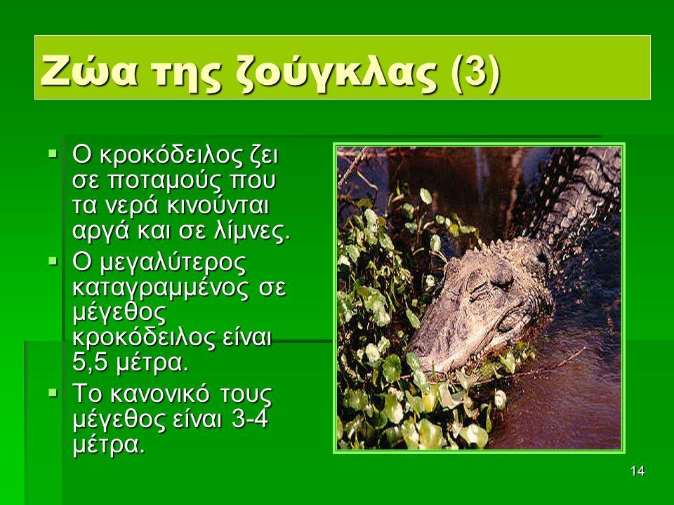 14 Ζώα της ζούγκλας (3)  Ο κροκόδειλος ζει σε ποταμούς που τα νερά κινούνται αργά και σε λίμνες.