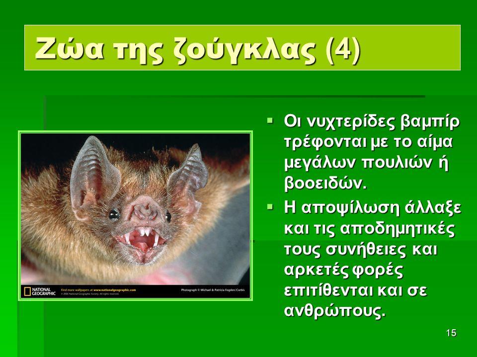 15 Ζώα της ζούγκλας (4)  Οι νυχτερίδες βαμπίρ τρέφονται με το αίμα μεγάλων πουλιών ή βοοειδών.