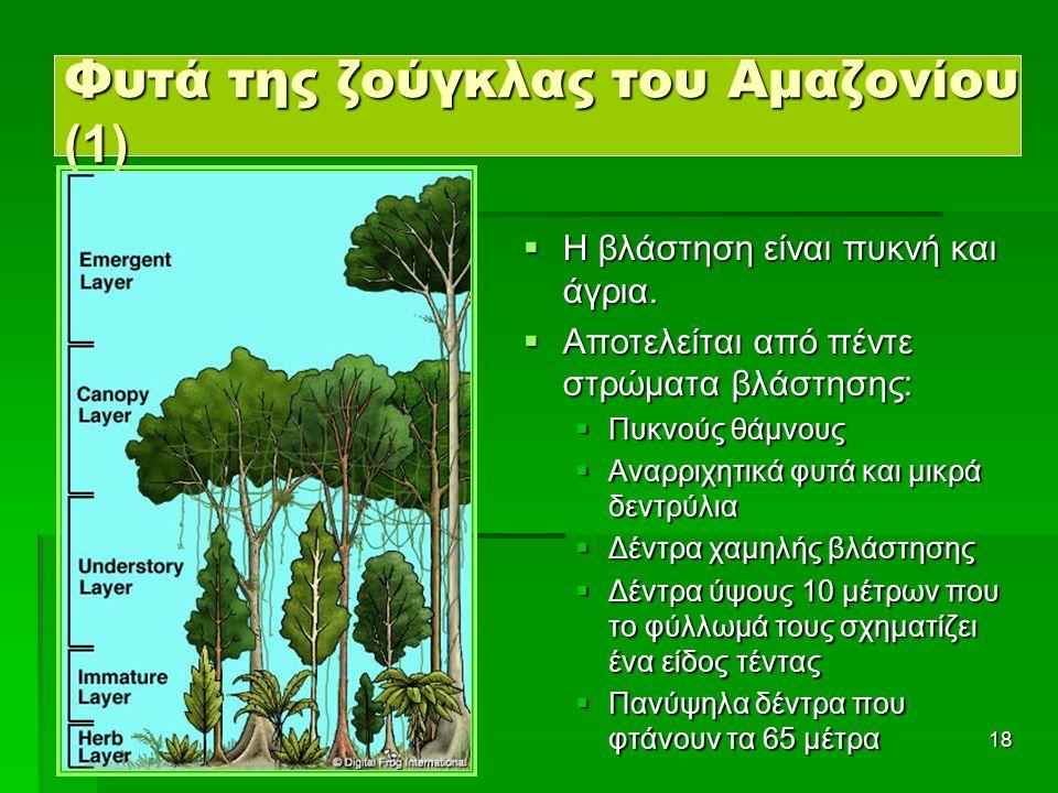18 Φυτά της ζούγκλας του Αμαζονίου (1)  Η βλάστηση είναι πυκνή και άγρια.