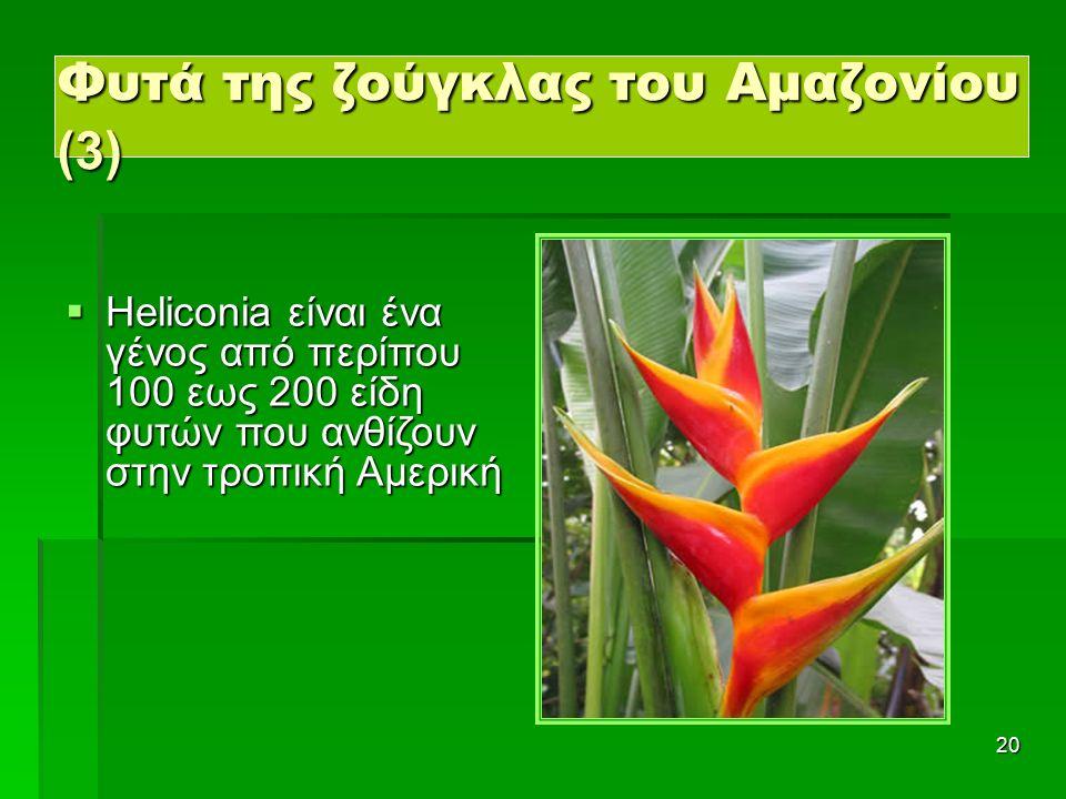 20  Heliconia είναι ένα γένος από περίπου 100 εως 200 είδη φυτών που ανθίζουν στην τροπική Αμερική Φυτά της ζούγκλας του Αμαζονίου (3)