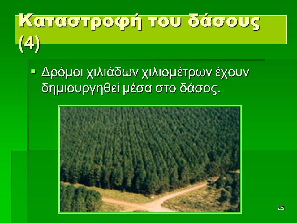 25 Καταστροφή του δάσους (4) ΔΔΔΔρόμοι χιλιάδων χιλιομέτρων έχουν δημιουργηθεί μέσα στο δάσος.