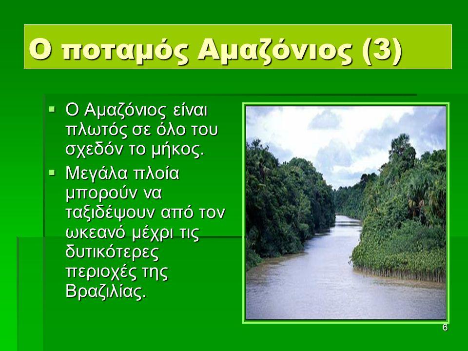 17 Ζώα της ζούγκλας (6) Δηλητηριώδεις βάτραχοι Ιγκουάνα Πίθηκος Μπλε παπαγάλος Τουκάν Τζάκουαρ