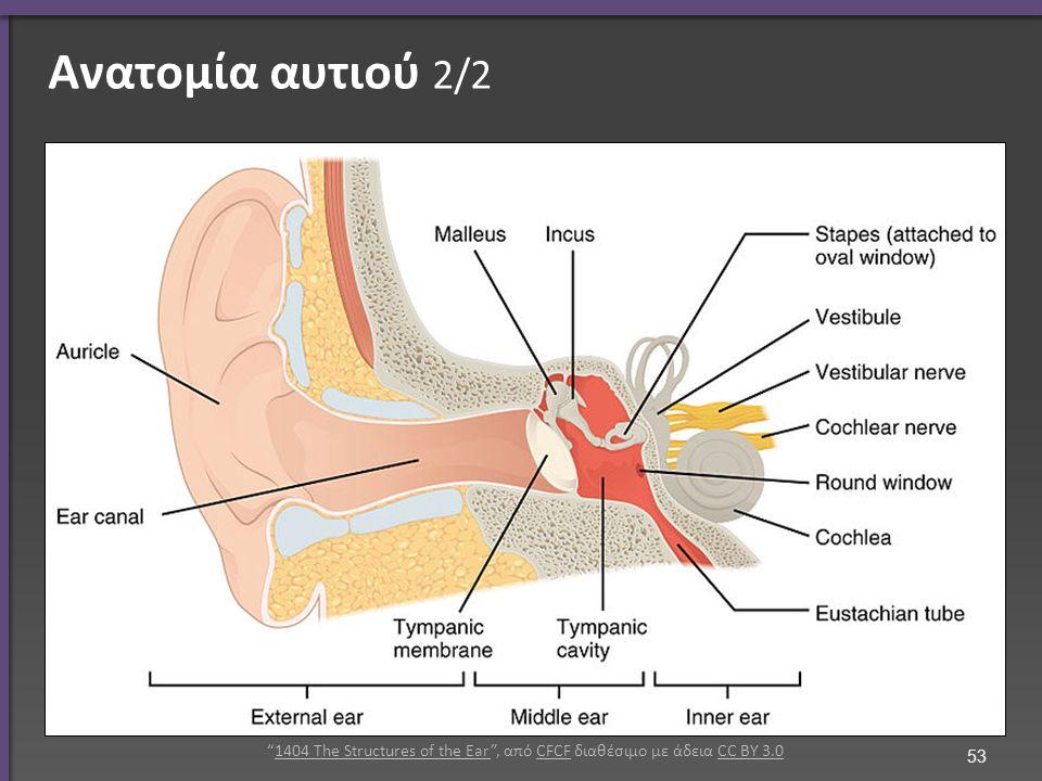 Ανατομία αυτιού 2/2 53 1404 The Structures of the Ear , από CFCF διαθέσιμο με άδεια CC BY 3.01404 The Structures of the EarCFCFCC BY 3.0