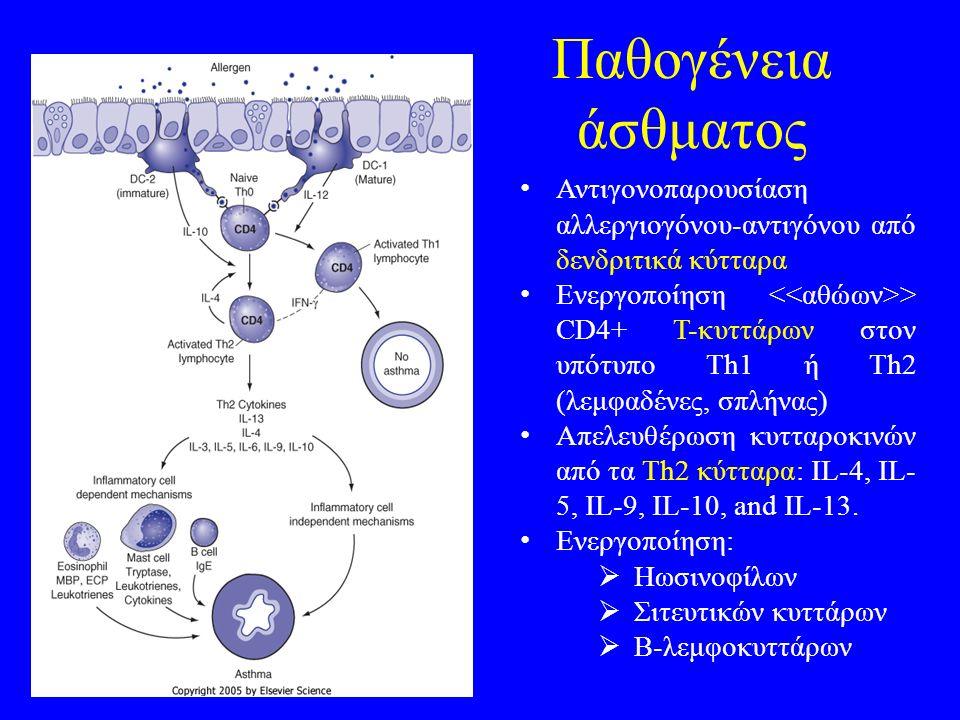 Αντιγονοπαρουσίαση αλλεργιογόνου-αντιγόνου από δενδριτικά κύτταρα Ενεργοποίηση > CD4+ T-κυττάρων στον υπότυπο Th1 ή Th2 (λεμφαδένες, σπλήνας) Απελευθέρωση κυτταροκινών από τα Th2 κύτταρα: IL-4, IL- 5, IL-9, IL-10, and IL-13.