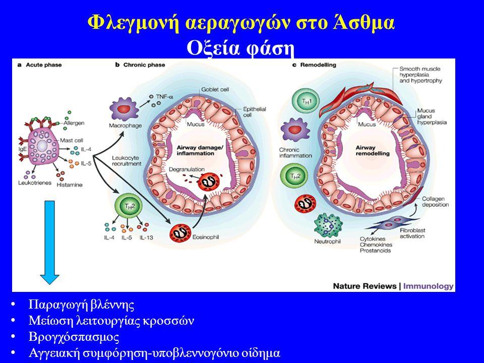 Φλεγμονή αεραγωγών στο Άσθμα Οξεία φάση Παραγωγή βλέννης Μείωση λειτουργίας κροσσών Βρογχόσπασμος Αγγειακή συμφόρηση-υποβλεννογόνιο οίδημα