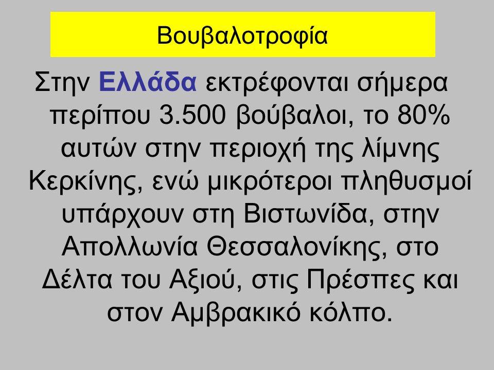 Στην Ελλάδα εκτρέφονται σήμερα περίπου 3.500 βούβαλοι, το 80% αυτών στην περιοχή της λίμνης Κερκίνης, ενώ μικρότεροι πληθυσμοί υπάρχουν στη Βιστωνίδα, στην Απολλωνία Θεσσαλονίκης, στο Δέλτα του Αξιού, στις Πρέσπες και στον Αμβρακικό κόλπο.