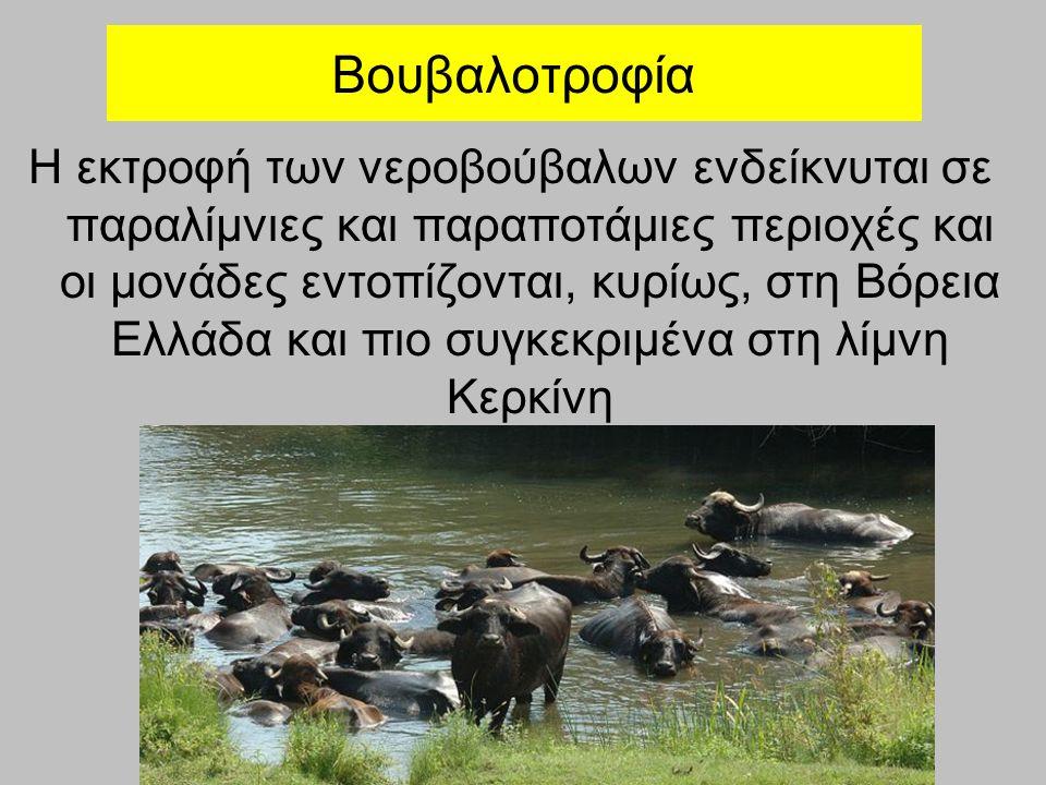 Βουβαλοτροφία Η εκτροφή των νεροβούβαλων ενδείκνυται σε παραλίμνιες και παραποτάμιες περιοχές και οι μονάδες εντοπίζονται, κυρίως, στη Βόρεια Ελλάδα και πιο συγκεκριμένα στη λίμνη Κερκίνη