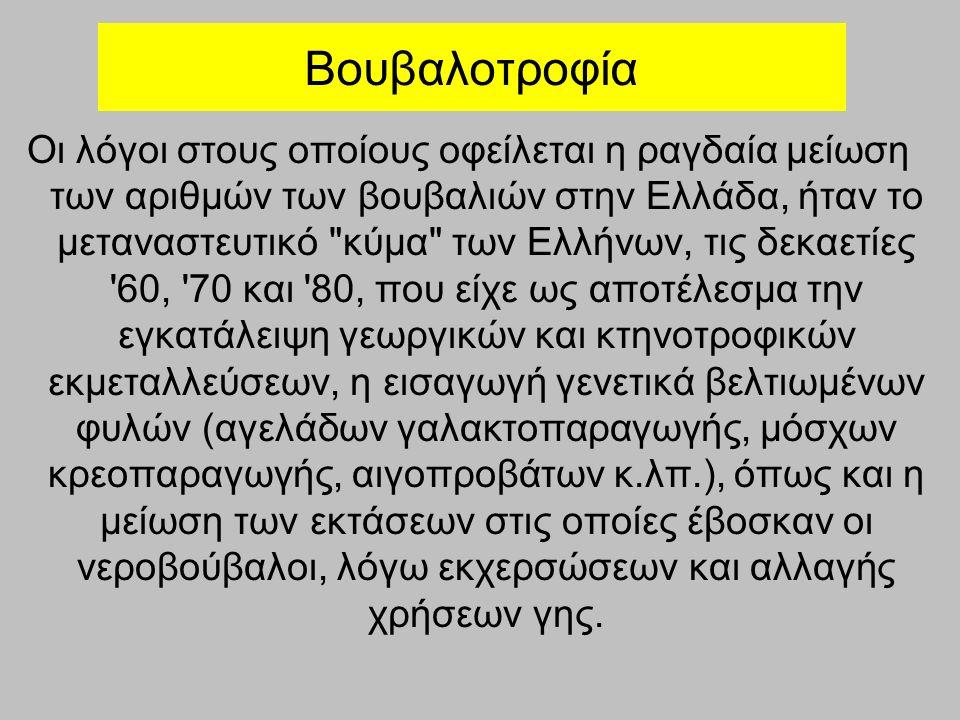 Βουβαλοτροφία Οι λόγοι στους οποίους οφείλεται η ραγδαία μείωση των αριθμών των βουβαλιών στην Ελλάδα, ήταν το μεταναστευτικό κύμα των Ελλήνων, τις δεκαετίες 60, 70 και 80, που είχε ως αποτέλεσμα την εγκατάλειψη γεωργικών και κτηνοτροφικών εκμεταλλεύσεων, η εισαγωγή γενετικά βελτιωμένων φυλών (αγελάδων γαλακτοπαραγωγής, μόσχων κρεοπαραγωγής, αιγοπροβάτων κ.λπ.), όπως και η μείωση των εκτάσεων στις οποίες έβοσκαν οι νεροβούβαλοι, λόγω εκχερσώσεων και αλλαγής χρήσεων γης.