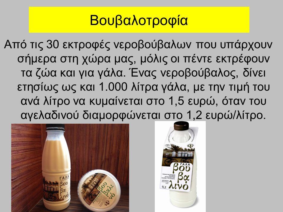 Βουβαλοτροφία Από τις 30 εκτροφές νεροβούβαλων που υπάρχουν σήμερα στη χώρα μας, μόλις οι πέντε εκτρέφουν τα ζώα και για γάλα.