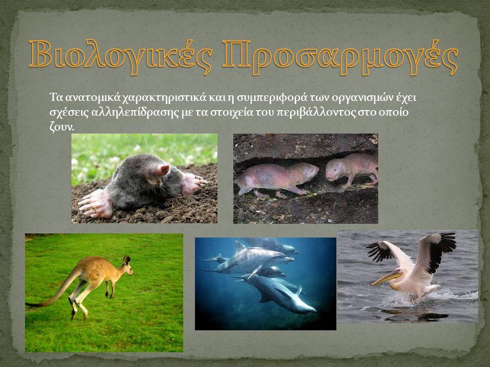 Τα ανατομικά χαρακτηριστικά και η συμπεριφορά των οργανισμών έχει σχέσεις αλληλεπίδρασης με τα στοιχεία του περιβάλλοντος στο οποίο ζουν.