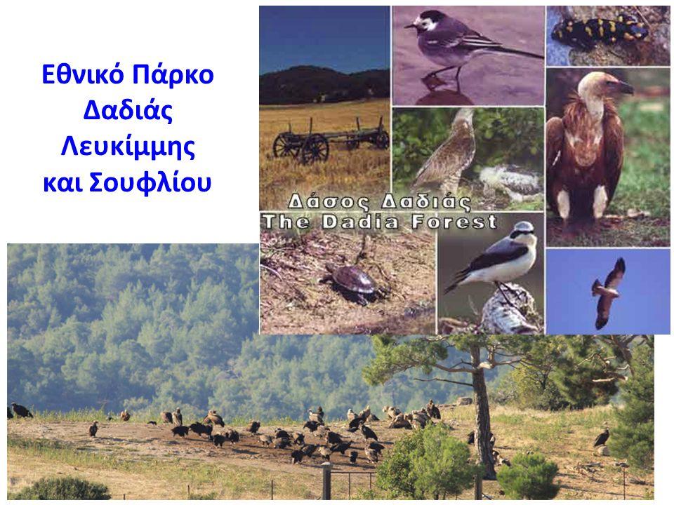 Εθνικό Πάρκο Δαδιάς Λευκίμμης και Σουφλίου
