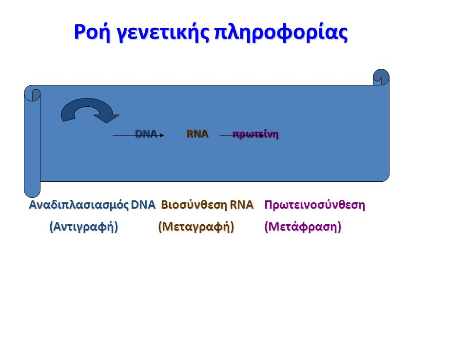 Ροή γενετικής πληροφορίας Αναδιπλασιασμός DNAΒιοσύνθεση RNAΠρωτεινοσύνθεση Αναδιπλασιασμός DNA Βιοσύνθεση RNA Πρωτεινοσύνθεση (Aντιγραφή)(Μεταγραφή)(Μετάφραση) (Aντιγραφή) (Μεταγραφή) (Μετάφραση) DNA RNA πρωτείνη
