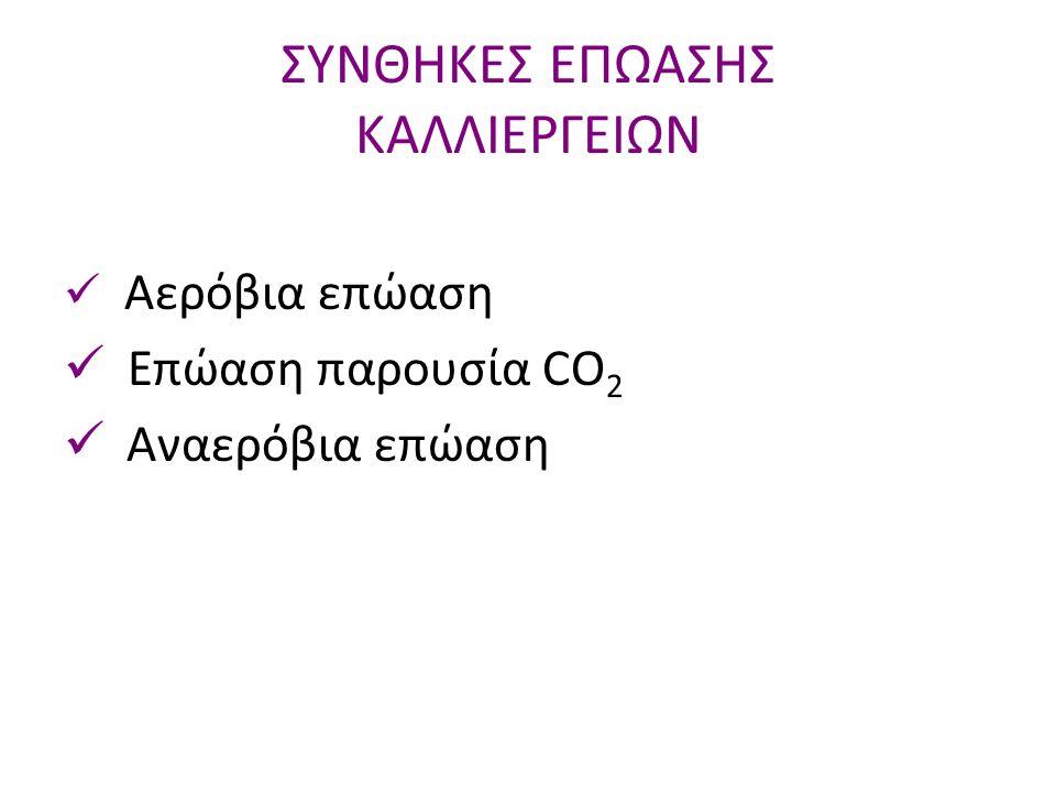 Αερόβια επώαση Επώαση παρουσία CO 2 Aναερόβια επώαση