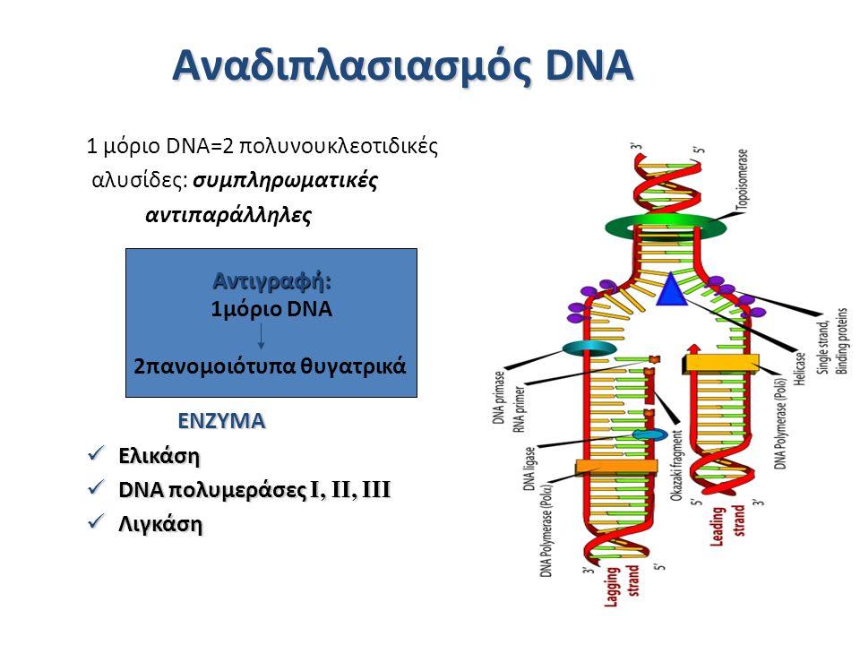 Αναδιπλασιασμός DNA 1 μόριο DNA=2 πολυνουκλεοτιδικές αλυσίδες: συμπληρωματικές αντιπαράλληλες ΕΝΖΥΜΑ Ελικάση Ελικάση DNA πολυμεράσες I, II, III DNA πολυμεράσες I, II, III Λιγκάση Λιγκάση Αντιγραφή: 1μόριο DNA 2πανομοιότυπα θυγατρικά