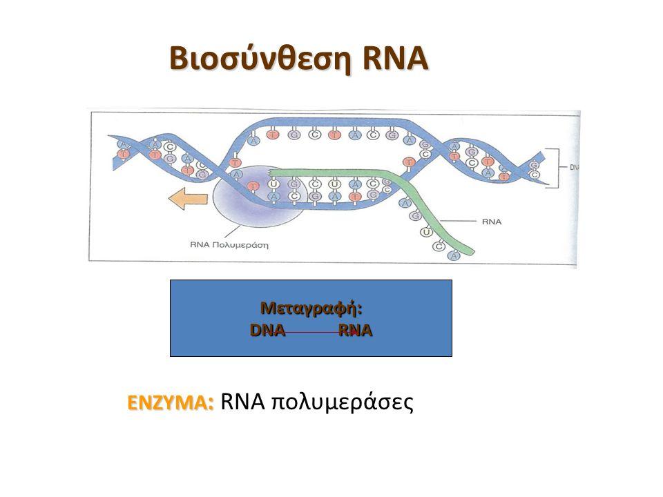 Βιοσύνθεση RNA ΕΝΖΥΜΑ : ΕΝΖΥΜΑ : RNA πολυμεράσες Μεταγραφή: DNA RNA