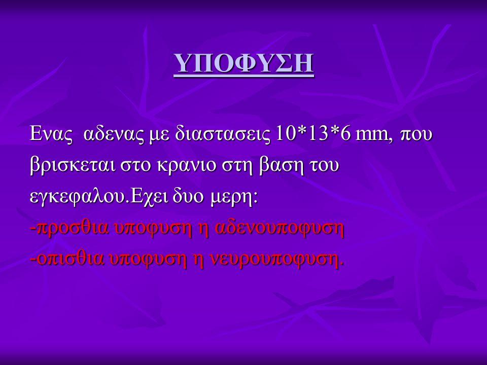 ΥΠΟΦΥΣΗ Ενας αδενας με διαστασεις 10*13*6 mm, που βρισκεται στο κρανιο στη βαση του εγκεφαλου.Εχει δυο μερη: -προσθια υποφυση η αδενουποφυση -οπισθια υποφυση η νευρουποφυση.