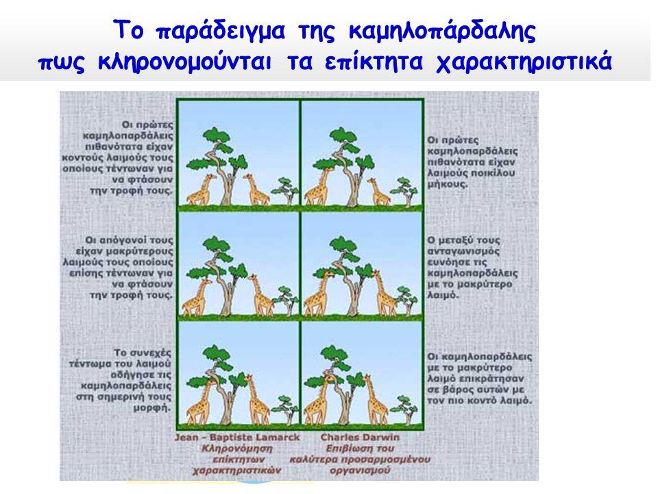 Το παράδειγμα της καμηλοπάρδαλης πως κληρονομούνται τα επίκτητα χαρακτηριστικά