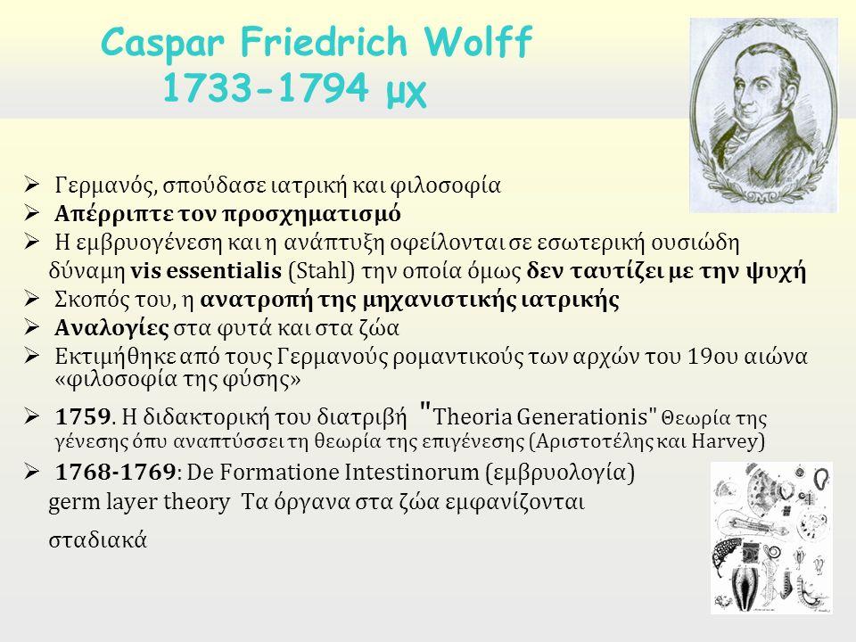  Γερμανός, σπούδασε ιατρική και φιλοσοφία  Απέρριπτε τον προσχηματισμό  Η εμβρυογένεση και η ανάπτυξη οφείλονται σε εσωτερική ουσιώδη δύναμη vis es