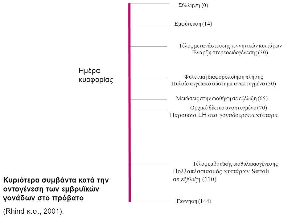 Σύλληψη ( 0) Εμφύτευση (14) Τέλος μετανάστευσης γεννητικών κυττάρων Έναρξη στερεοειδογένεσης (30) Φυλετική διαφοροποίηση πλήρης Πυλαίο αγγειακό σύστημα αναπτυγμένο (50) Μειώσεις στην ωοθήκη σε εξέλιξη (65) Ορχικό δίκτυο αναπτυγμένο (70) Παρουσία LH στα γοναδοτρόπα κύτταρα Τέλος εμβρυϊκής ωοθυλακιογένεσης Πολλαπλασιασμός κυττάρων Sertoli σε εξέλιξη (110) Γέννηση (144) Ημέρα κυοφορίας Κυριότερα συμβάντα κατά την οντογένεση των εμβρυϊκών γονάδων στο πρόβατο (Rhind κ.σ., 2001).