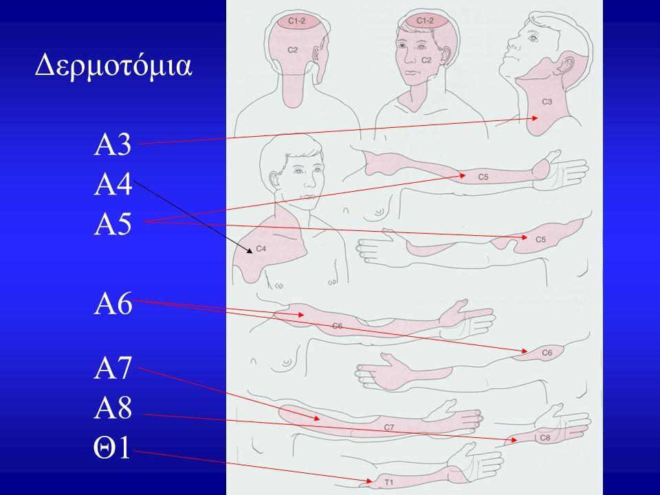 Δερμοτόμια Α6 Α3 Α4 Α5 Α7 Α8 Θ1
