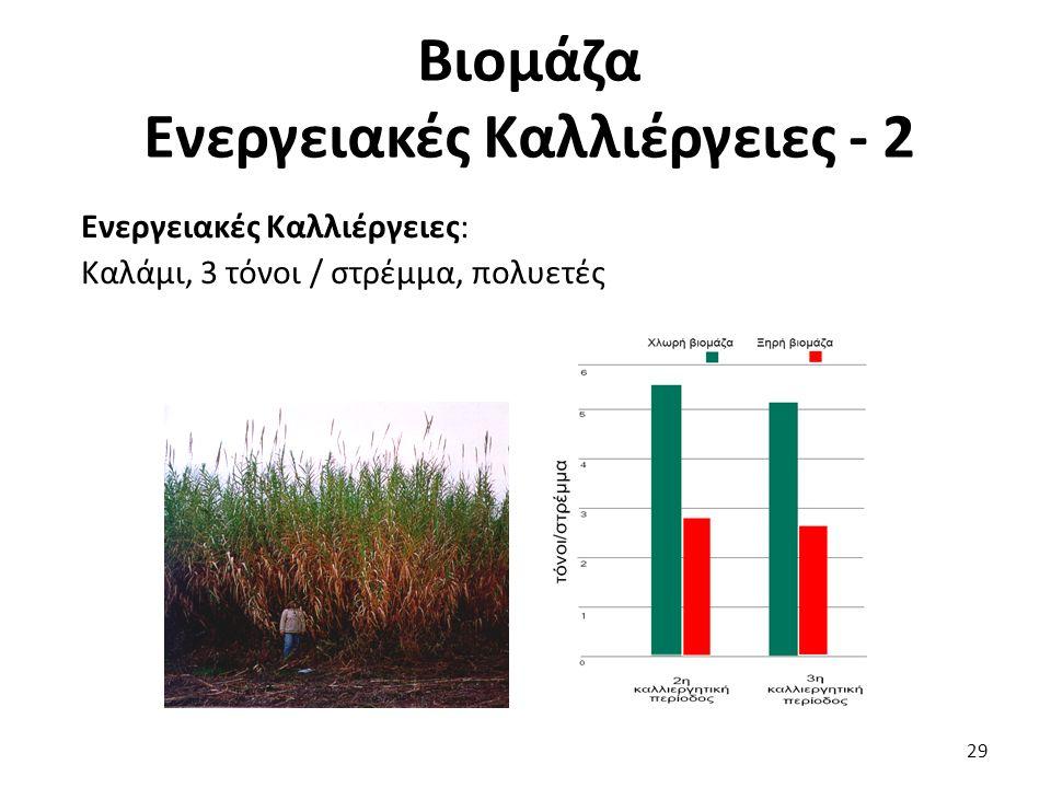 Ενεργειακές Καλλιέργειες: Καλάμι, 3 τόνοι / στρέμμα, πολυετές Βιομάζα Ενεργειακές Καλλιέργειες - 2 29