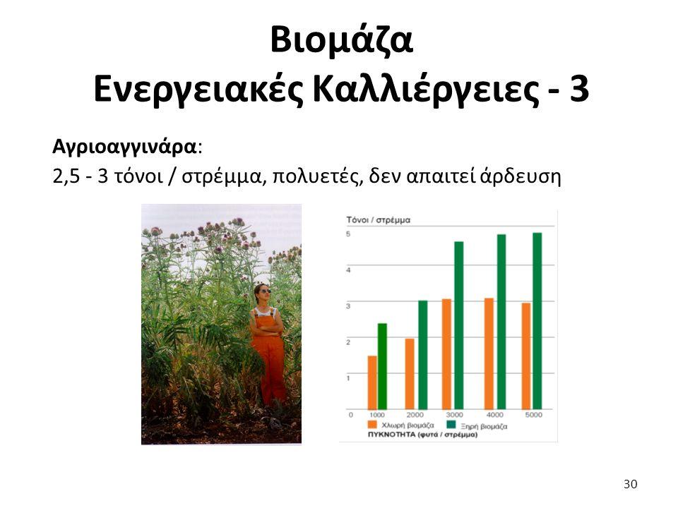 Βιομάζα Ενεργειακές Καλλιέργειες - 3 Αγριοαγγινάρα: 2,5 - 3 τόνοι / στρέμμα, πολυετές, δεν απαιτεί άρδευση 30