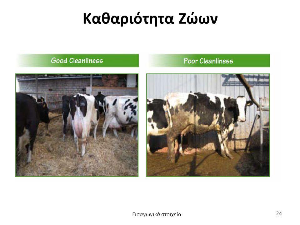 Καθαριότητα Ζώων Εισαγωγικά στοιχεία 24