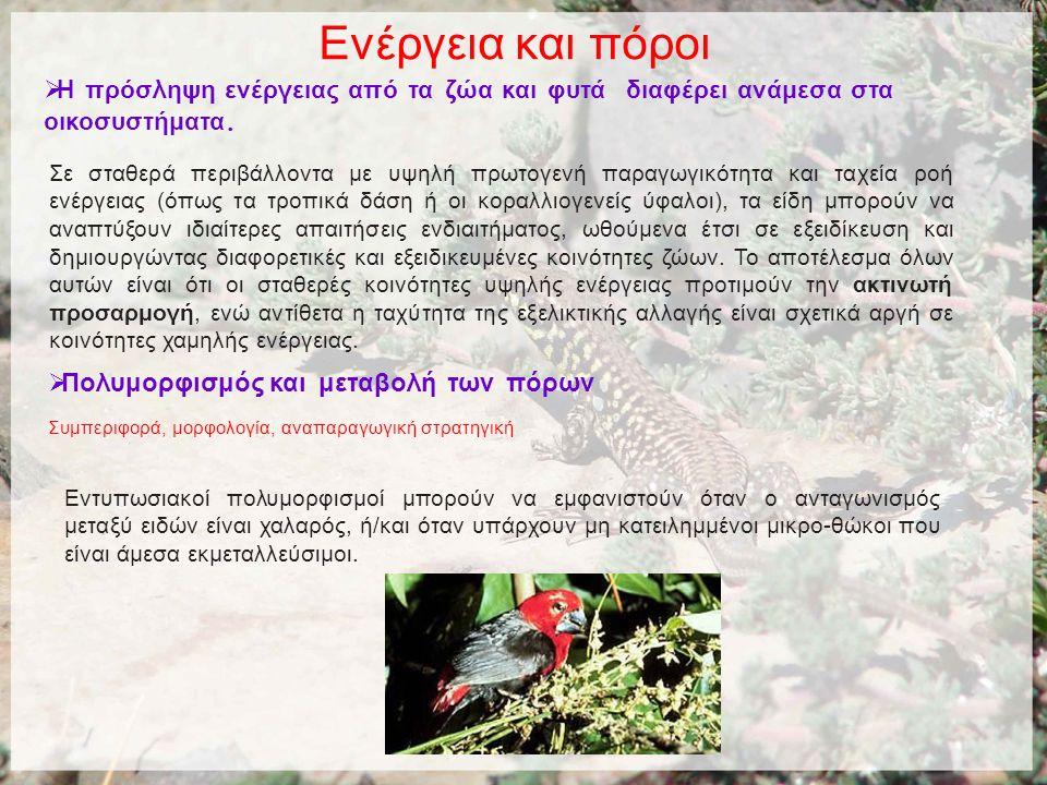 Ενέργεια και πόροι  Η πρόσληψη ενέργειας από τα ζώα και φυτά διαφέρει ανάμεσα στα οικοσυστήματα.