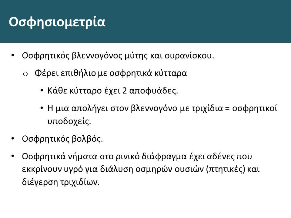 Οσφησιομετρία Οσφρητικός βλεννογόνος μύτης και ουρανίσκου.