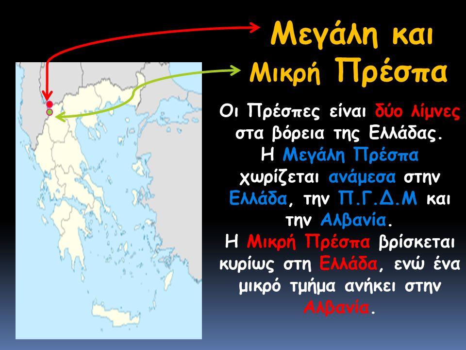 Μεγάλη και Μικρή Πρέσπα Οι Πρέσπες είναι δύο λίμνες στα βόρεια της Ελλάδας.